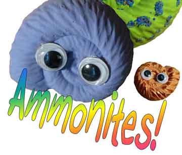Now meet the new BABY ammonites